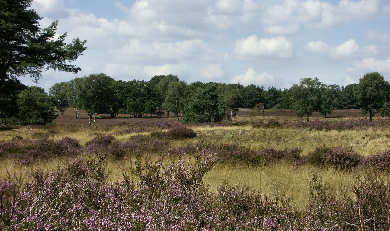 Heideveld op Nationaal Park Sallandse Heuvelrug